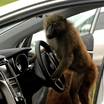 Hyundai-i30-Monkeys-2[2]